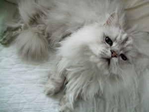 猫と一緒-20100811_07P
