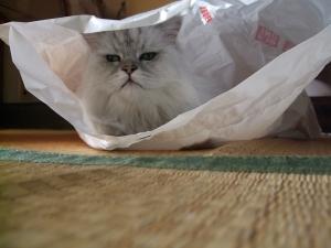 猫と一緒-20131015_05P