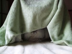 猫と一緒-20110211_01P