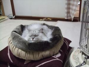 猫と一緒-20121123_02P