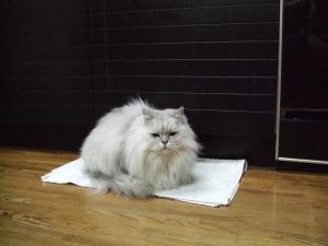 猫と一緒-20111227_01P