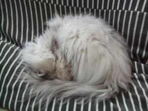 猫と一緒-20121210_01P