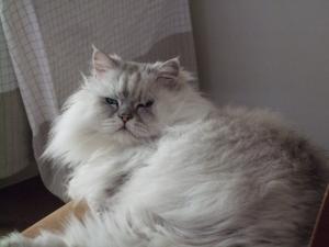 猫と一緒-20110121_11P