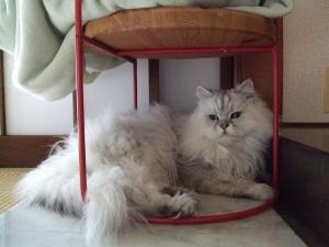 猫と一緒-20110715_02P