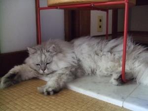 猫と一緒-20120823_01P