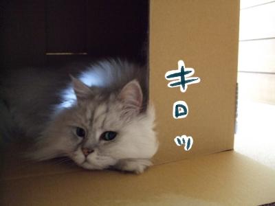 猫と一緒-20090521_01p
