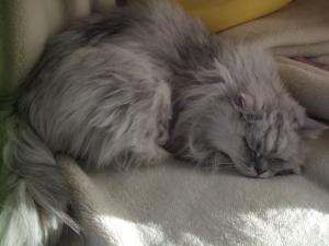 猫と一緒-20120118_02P
