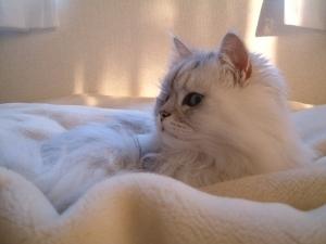 猫と一緒-20091217_01P
