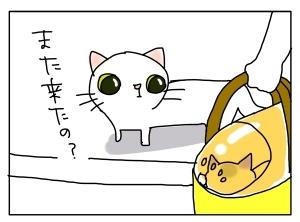 猫と一緒-20110908_02
