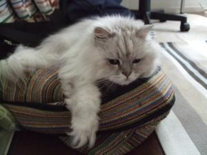 猫と一緒-20130725_10P