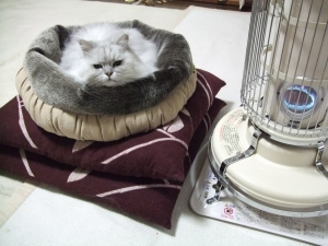 猫と一緒-20121123_01P