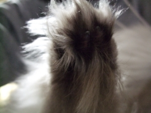 猫と一緒-20100114_03P