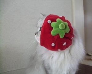 猫と一緒-20100922_08P