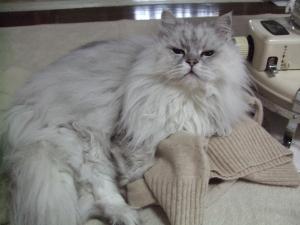 猫と一緒-20120505_05P