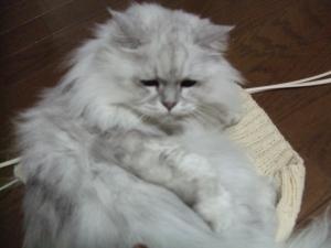 猫と一緒-20111109_01P