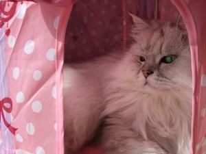 猫と一緒-20111122_03P