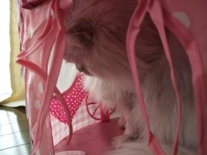 猫と一緒-20111122_02P