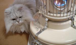 猫と一緒-20080128_2
