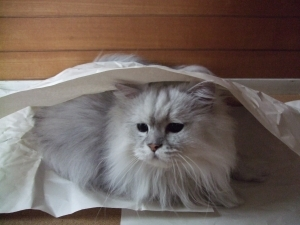 猫と一緒-20110701_02P