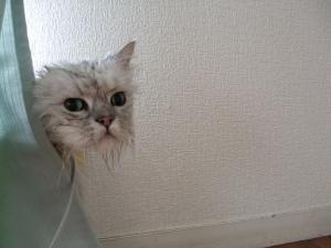 猫と一緒-20090928_17P