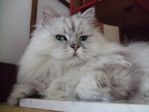 猫と一緒-20110715_01P