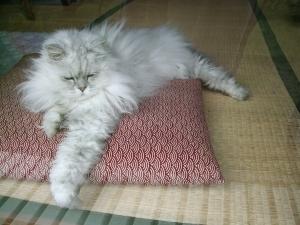 猫と一緒-20130516_02P