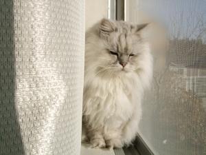猫と一緒-201012127_01P
