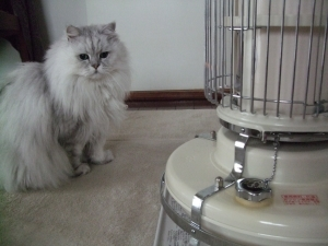 猫と一緒-20111222_03P