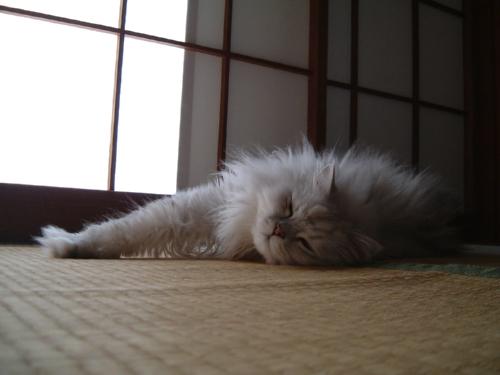 猫と一緒-20070727_2