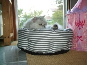 猫と一緒-20131001_09P
