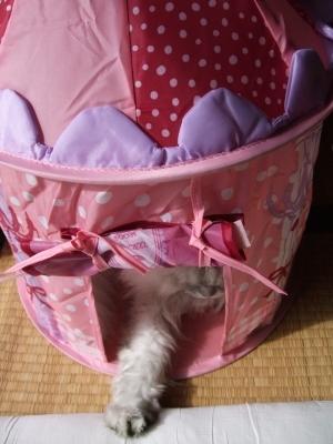 猫と一緒-20111122_04P