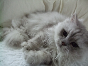 猫と一緒-20100811_04P