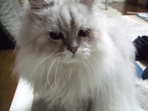 猫と一緒-20130611_03P