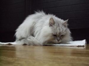 猫と一緒-20111227_02P