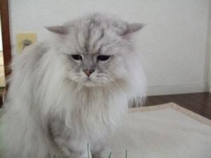 猫と一緒-20110829_01P