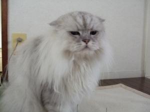 猫と一緒-20110829_02P