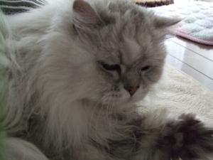 猫と一緒-20130409_02P