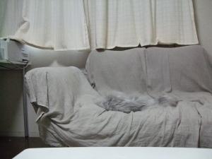 猫と一緒-20111206_01P