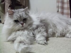 猫と一緒-20120428_03P