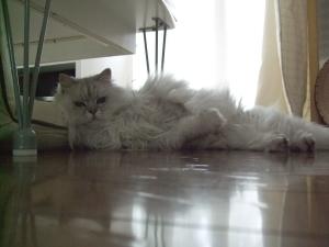 猫と一緒-20100714_01P