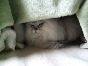 猫と一緒-20110211_02P