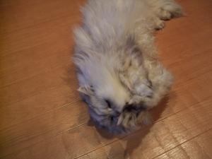 猫と一緒-20120308_04P