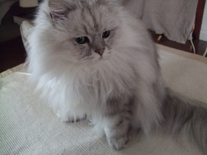 猫と一緒-20110119_16P