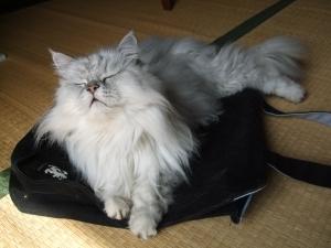 猫と一緒-20121002_15P