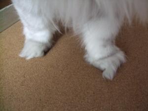猫と一緒-20090522_08P