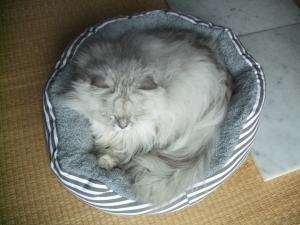 猫と一緒-20131001_06P