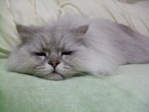 猫と一緒-20100417_02P