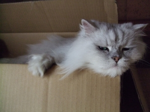 猫と一緒-20090713_11P
