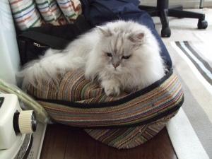 猫と一緒-20130725_09P