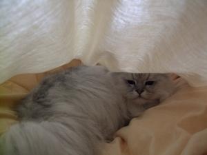 猫と一緒-20100423_08P